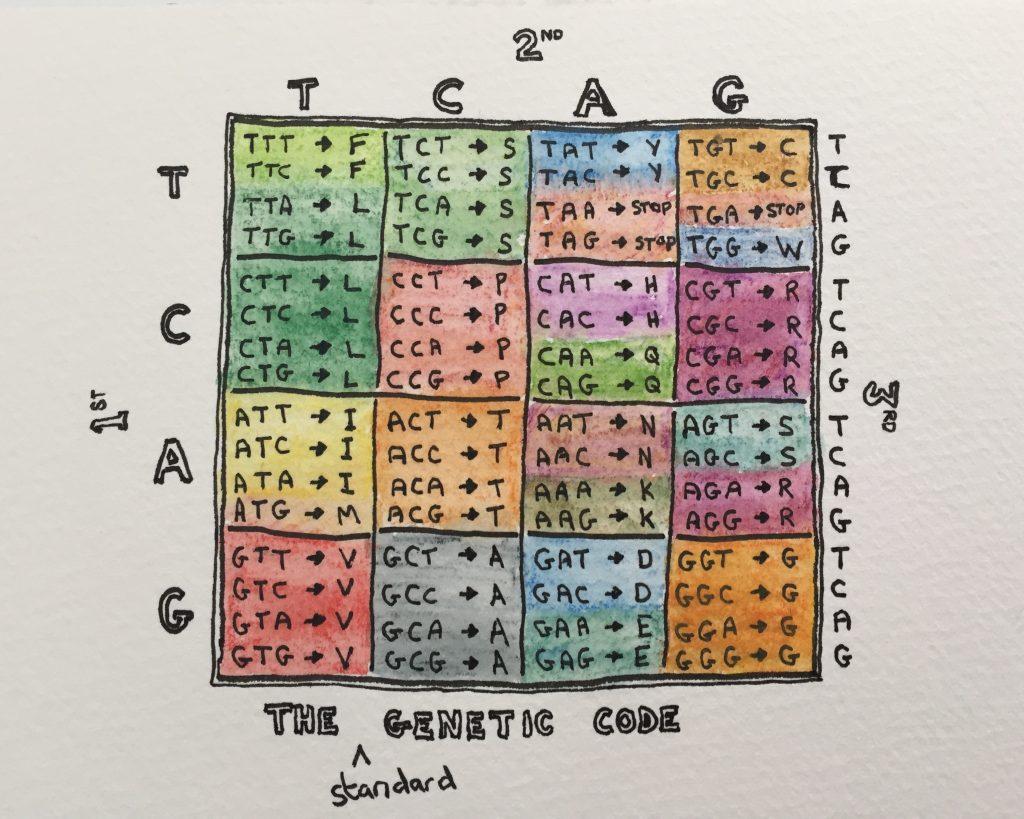 The Standard Genetic Code